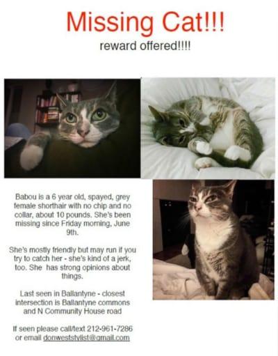 NC Cat Ad