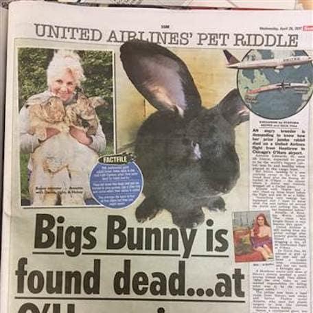 bigs bunny