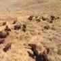 Alaskan bush people bison hunt trailer 06