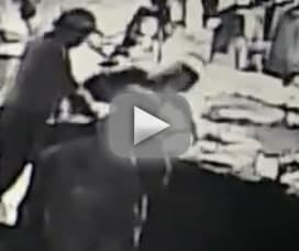 Three thieves steal aquarium shark in worlds dumbest heist