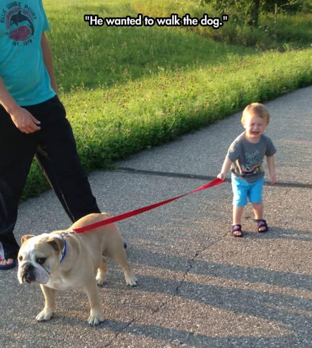 Dog Walk Fail
