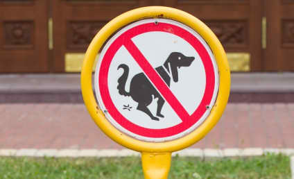 Spanish Town Mails Dog Poop to Irresponsible Pet Owners