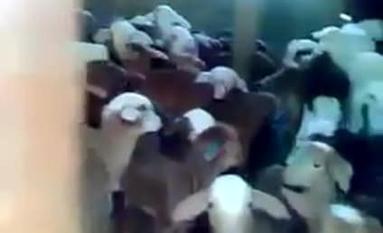 Man Yells at Goats, They Yell Baaaack (See What We Did There?)