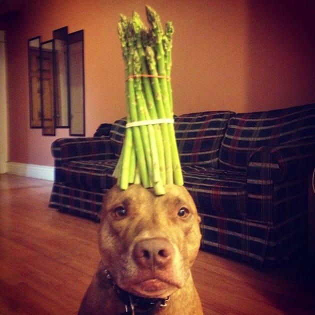 Dog Balances Vegetables