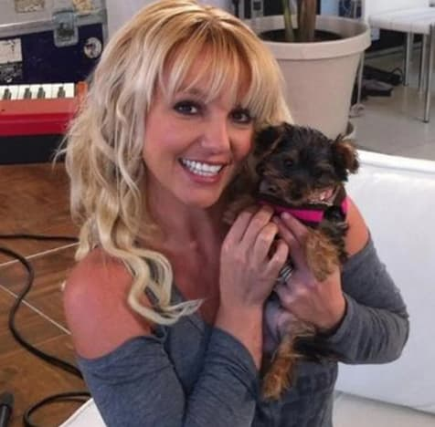 Britney Spears Shares Bikini Pic Of Her Riding On Sams