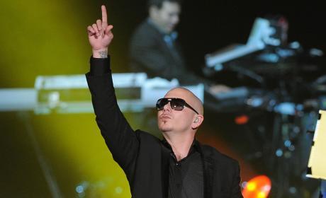 Pitbull Picture