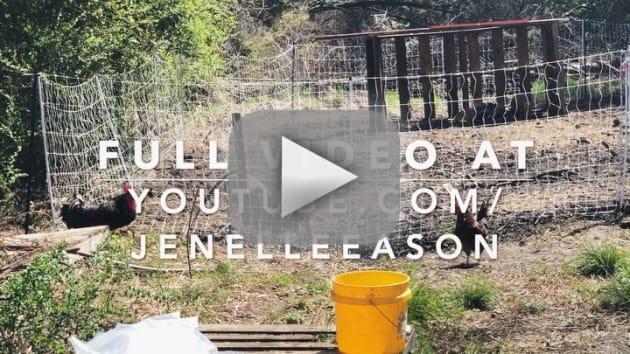 Jenelle evans homesteader