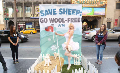 Courtney Stodden Protests Wool, Looks Freezing