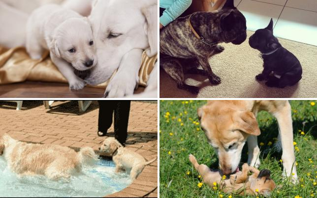 17 photos of dogs acting as parents listen up son
