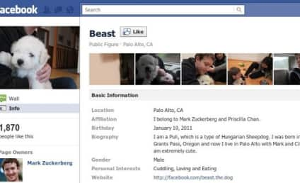 "Mark Zuckerberg Adopts Puppy, Gets 2K ""Likes"""