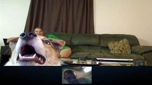 Dog on Skype
