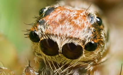 Spiders Could Eat Every Human on Earth, Scientists Confirm