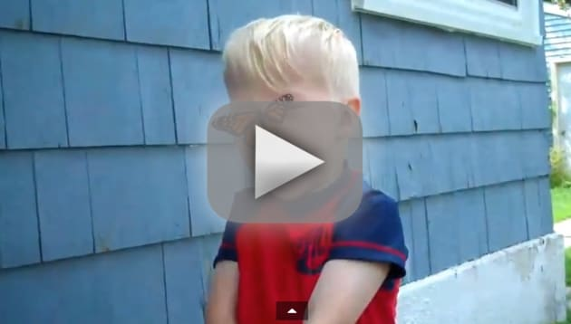 Butterfly Lands on Child's Nose