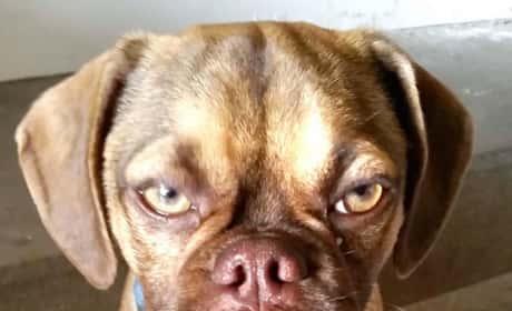 Earl the Grumpy Dog