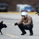 Dog Break
