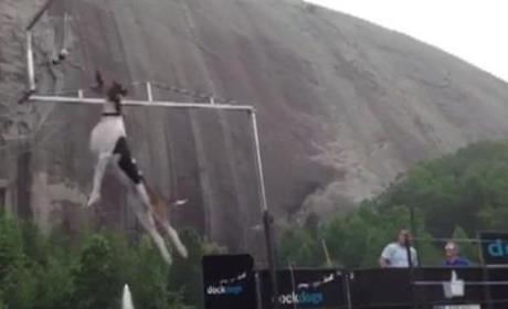 Dog Breaks Vertical Jump Record