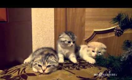 Cats Yawn in Unison, Threaten to Break Internet