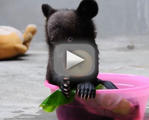 Baby Bear Eats an Apple