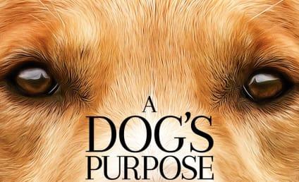A Dog's Purpose: Alleged Animal Cruelty on Set Spurs Boycott