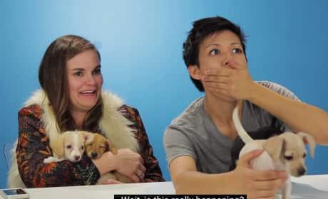 Drunk Women Get Surprised by Puppies