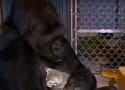 Koko the Gorilla Passes Away at 46