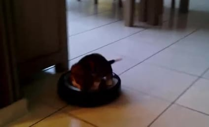 Puppy Rides Around on Roomba, Sort of Likes It