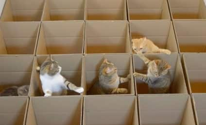 Cats Frolic in Boxes, Have Best Time EVER