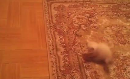 Kitten Gets Scared, Bouncy on Patterned Carpet