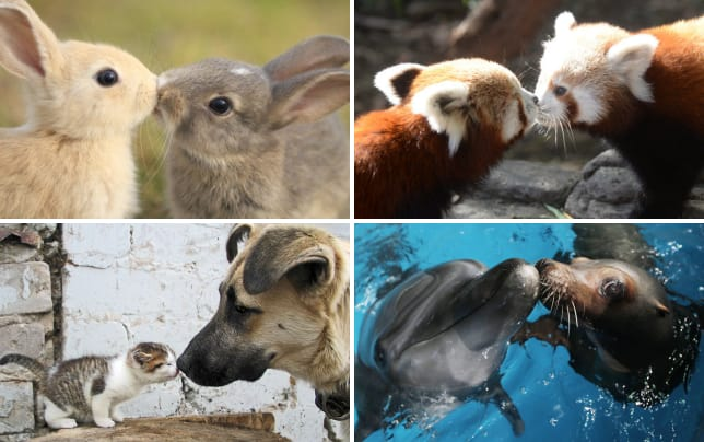 17 adorable photos of animals kissing bunnies in love