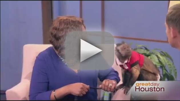 Monkey Wallops Morning Show Host