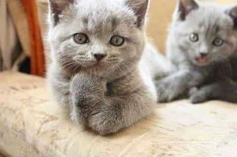Thinking Cat Thinks