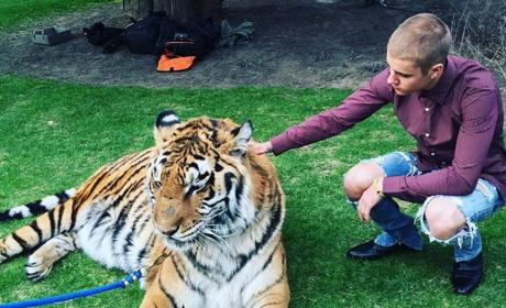 Justin Bieber and a Tiger