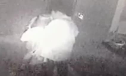 Vance McAllister, Louisiana Congressman, Admits Kissing Staffer in Surveillance Video