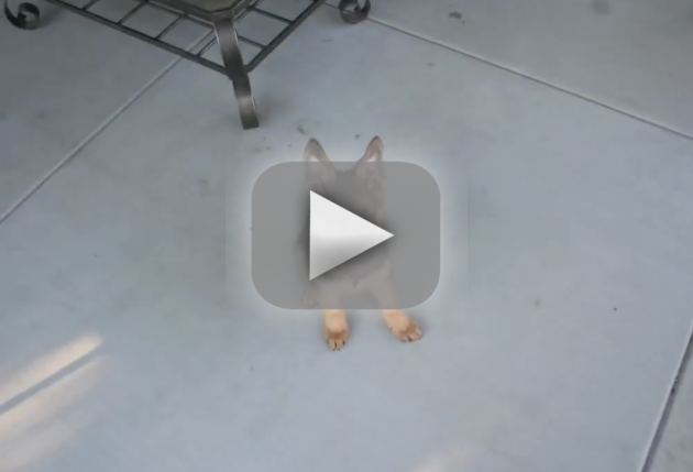 Puppy Time Lapse Video