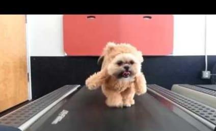 Dog Wears Bear Costume, Walks on Treadmill