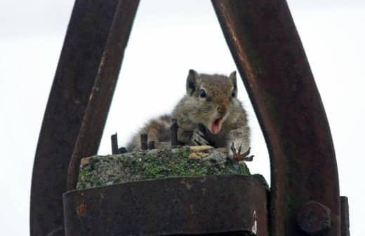 Poor Squirrel