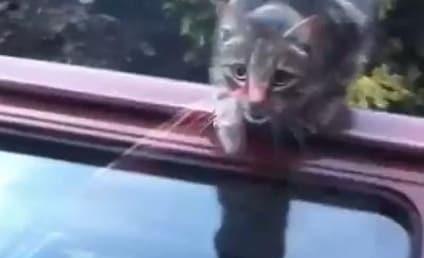 Cat Tries, Fails to Jump Through Car Window