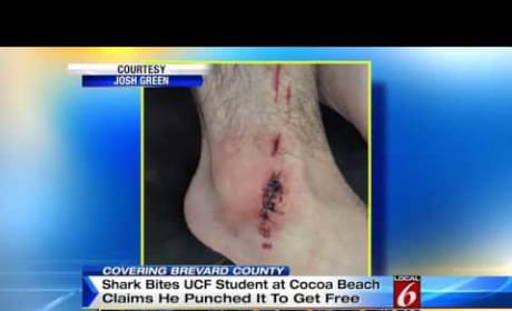 UCF Student Punches Shark
