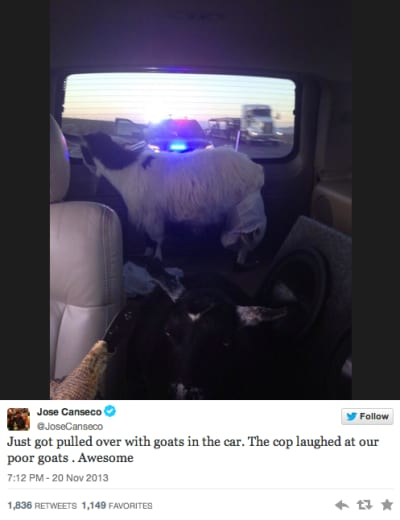 Goat in Jose Canseco's Car