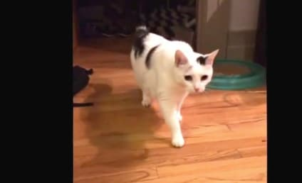 Cat Owner Films Cat Eating, Falls Over Chair