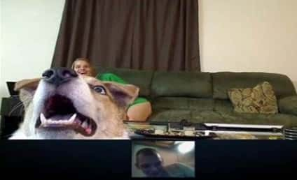 Dog Excitedly Skype-Bombs Deployed Military Owner, Misses Him Overseas