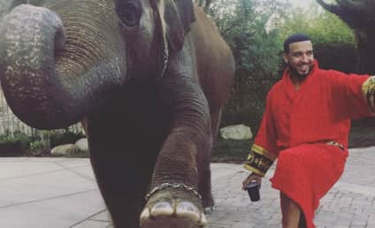 French Montana and Iggy Azalea Accused of Animal Cruelty: Find Out Why!