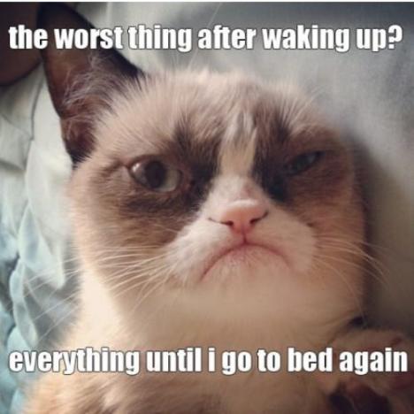 Very Grumpy Cat
