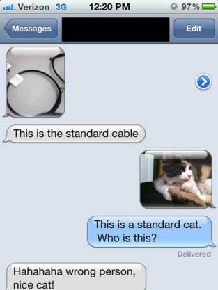 Standard Cat
