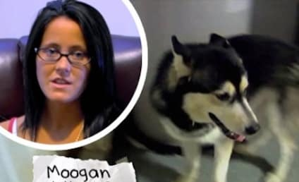 Jenelle Evans' Dog Stolen; Pair of Idiots Charged With Larceny