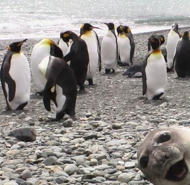 Seal Photobomb!