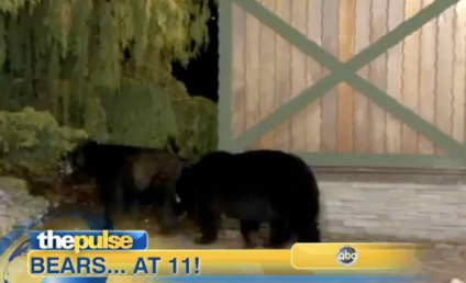 Bears Interrupt Pennsylvania Weather Report
