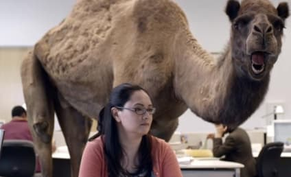 "Connecticut School Bans Students from Saying ""Hump Day"""