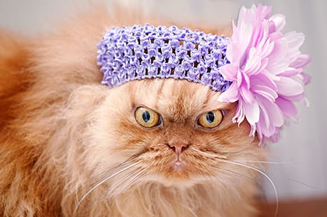 You Can Buy The Images On Garfi S Owner Getty Page