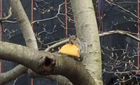 Taco Squirrel Takes New York City, Internet By Storm